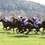 Pferderennen_4
